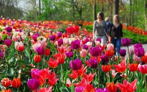 Los jardines de Keukenhof